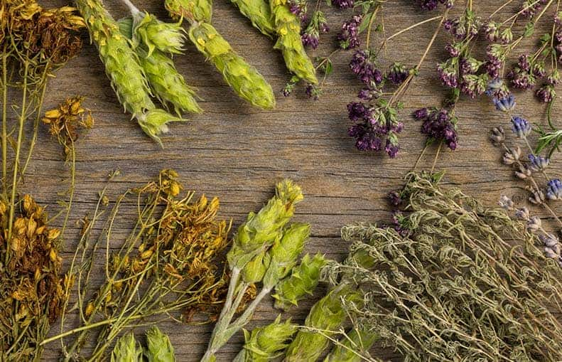 Parallelo Health - your source for health, workouts, food, supplements and more - blog - Your Garden as a Medicine Cabinet with The Lost Book of Herbal Remedies